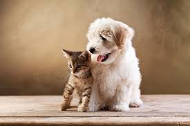 cute kittens and puppies together wallpaper. Brilliant Cute Dogs Cats Two Kitten Bolognese Animals Baby Puppy Wallpaper  5616x3744  633143 WallpaperUP For Cute Kittens And Puppies Together Wallpaper