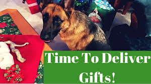 a german shepherd delivering gifts