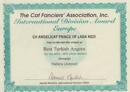diploma best cfa turkish angora ch angelicat prince of  diploma best cfa turkish angora 2010 2011 ch angelicat prince of lada kedi
