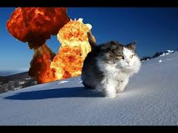 exploding cats. Fine Exploding Butler The Exploding Cat In Cats