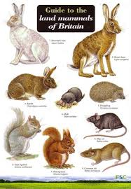 Id Chart British Land Mammals