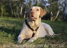 padded leather dog harness uk