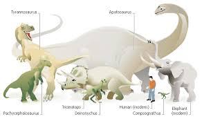 Dinosaur Sizes Comparison Chart Untitled Document