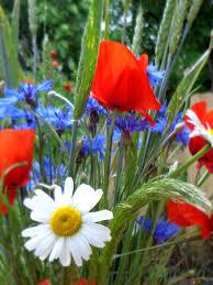 フリー画像をダウンロード 夏の花の花束 帰属とライセンス 無料フォト