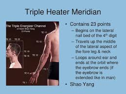 Ppt Acupuncture Meridians Powerpoint Presentation Free