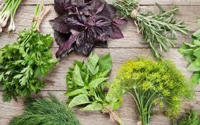 herbs plants that help prevent hair loss