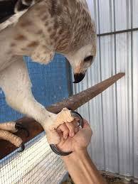 Small eagle claw fist