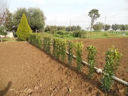 Piantumazione siepi macerata giardiniere giardinaggio macerata mc