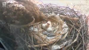 Nyu Birth Plan Baby Hawks Birth Captured By Camera At Nyu Greenwich Village
