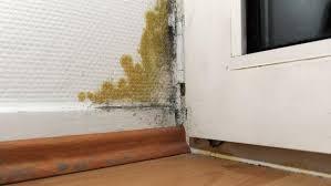 Im wohnzimmer am fenster kommt jetzt auch der schimmel durch (schwarz ca. Schimmel Entdecken Und Richtig Entfernen