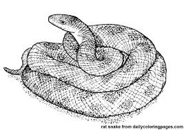 Small Picture Texas Rat Snake Animal Coloring Pages Bebo Pandco