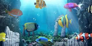 download anipet aquarium live wallpaper apk full version. download app aquarium live wallpaper apk for nokia anipet apk full version