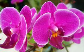 Beautiful Pink Flowers Hd Bunga Cantik Pink Wallpaper Hd