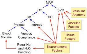 Cv Physiology Factors Regulating Arterial Blood Pressure