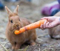 תוצאת תמונה עבור בעליי חיים