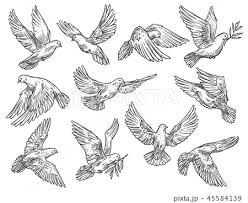 飛んでいる鳥のイラスト素材 Pixta