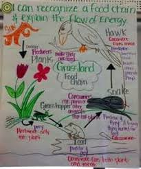 96 Best Science Anchor Charts Images Science Anchor Charts