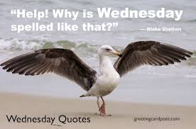 Hump Day Quotes Impressive Wednesday Quotes And Sayings For Hump Day Greeting Card Poet