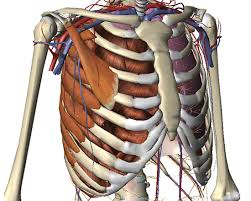 costochondritis chest wall pain rib