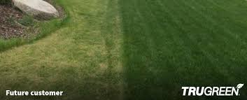 untreated lawn compared to a trugreen lawn in omaha