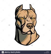 Pit Bull Head Vector Stock Photo 108230744 Alamy