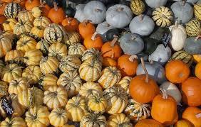 Gourd Identification Chart Cucurbita Wikipedia