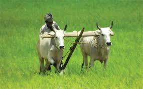 Resultado de imagen de India agriculture
