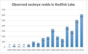 Endangered Species Success Idaho Salmon Regaining Fitness