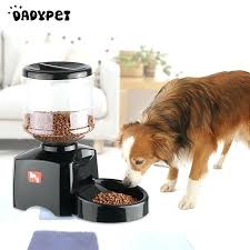 automatic pet feeder for cat dog electric dry food dispenser dish bowl 1 3 meal day top best automatic dog feeder choices of outdoor