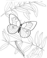 Small Picture Caterpillar and Butterfly 3 coloring page Free Printable