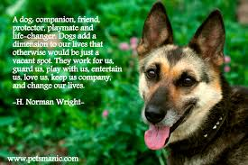 Its Amazing To Have A Dog For Life Pets Manic Blog