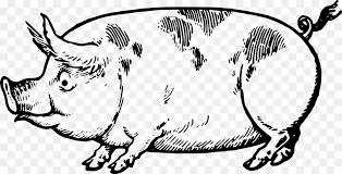 pig drawing made easy a helpful book for young artists the way to begin and finish your sketches clearly shown step by step line art clip art creative