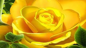 3d rose hd wallpapers download