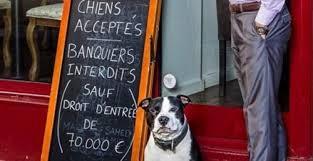 Resultado de imagem para animais em restaurantes