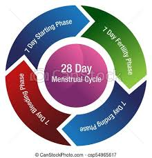 Period Cycle Chart Menstrual Cycle Fertility Chart