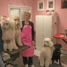 photo of fulton s professional dog grooming berwyn pa united states linda and