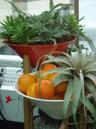 Indoor Garden Trendy New Ideas For The Indoor Garden That Bloomin Garden