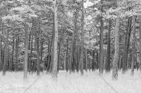 Pine Forest Fotobehang Behang Photowall Nieuw Huis