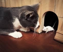 التخلص من الفئران والفلفل الاسود الاشياء التي تطرد الفئران