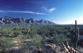 Image result for catalina az
