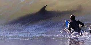 shark attack on humans. Delighful Humans Why Do Sharks Attack Humans Inside Shark Attack On Humans T