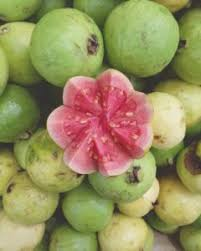 Bread Fruit Leaves Benefits  BREAD FRUIT LEAVES  Herbs And Jamaican Fruit Trees