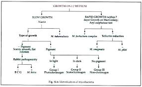 Gram Negative Bacteria Chart Achievelive Co