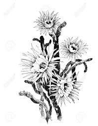 夏の庭の花の手描きイラスト