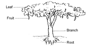 old school   test papers   old school   continual assessment      the diagram below shows a raintree