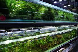 new aquatic plant stock list