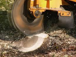 17 best ideas about stump grinder tree grinder minneapolis stump grinding stump removal stump grinder tree stump removal tree