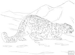 Snow Leopard Coloring Pages P3733 Snow Leopard Coloring Pages Drawn