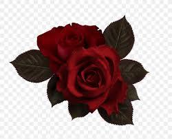 Flower Rose Petal Png 1268x1024px Flower Chart Color