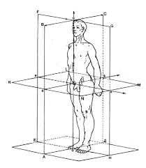 Реферат Анатомическая номенклатура Основные оси и плоскости  Основные оси и плоскости человеческого тела